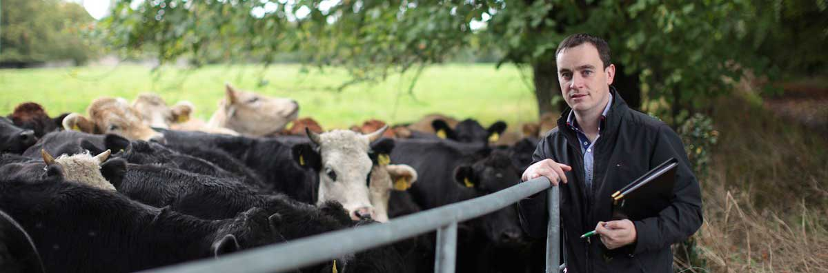 Economics - Michael Hayden with Cows - Maynooth University