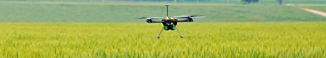 DroneWheatField